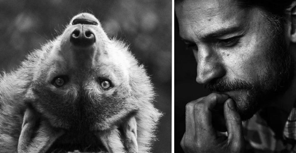 Lupo cattivo - La favola dei tre porcellini